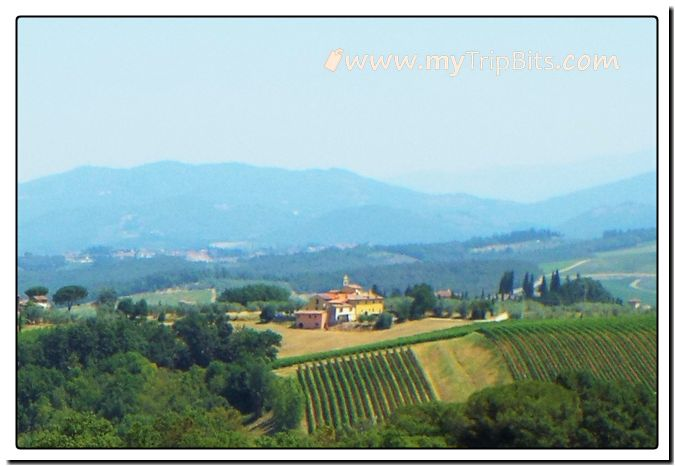 Vinyards of Tuscany